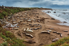 Chillin' Elephant Seals (shigbyphoto) Tags: beach ocean california pacificocean pacificcoasthighway pch landscape landscapephotography sky clouds animals san simeon piedras blancas seals elephant travel travelphotography nature wildlife photography
