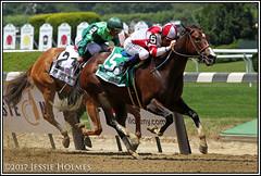 Songbird wins the Ogden Phipps (Spruceton Spook) Tags: horseracing horses belmontpark songbird odgenphipps
