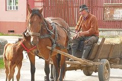 salutation (vtossuma) Tags: cheval charrette campagne transylvanie roumanie