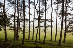 Tree line (J C Mills Photography) Tags: chatsworth mist peak district derbyshire summer trees morning light