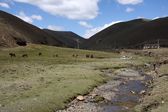 Landscape in the Tagong region, Sichuan (sensaos) Tags: travel sensaos 2014 china tibet asia tagong kham sichuan landscape animal river mountains