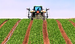May23Image3592 (Michael T. Morales) Tags: spreckles agriculture lettuce tractor farm farmer cultivation plow 70d salinasvalley salinas