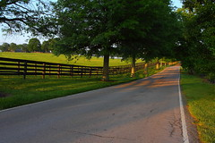 Early morning in horse country (MarcusDC) Tags: lexingtonky horsecountry road fence morning rural elkchesterroad