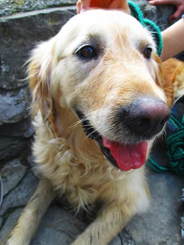 Samanta - Zajův pes
