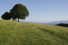 Weissensberg (martine_ferron) Tags: weissensberg chapelle arbre montagne lacdeconstance bodensee bavière souabe
