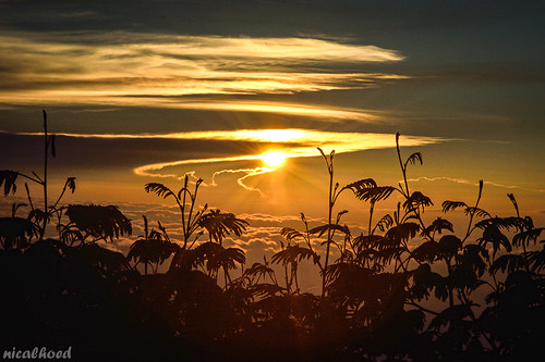 Sunrise at Mt. Slamet Alpine