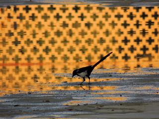 Thirsty crow drinks water reflecting beautiful palace patterns - Chehel Sotun, Isfahan, Iran