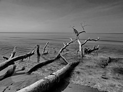 Impressionen (Wunderlich, Olga) Tags: totholz ostsee darss prerow weststrand wasser natur landschaft himel wellen