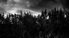 20170611_175001 (ghostof_) Tags: ghostof monochrome nature blackandwhite bw landscape grain vsco vscocam vscofilm lightroom4 sky tree
