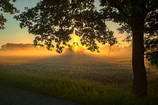 Morgenstimmung; Braunschweig Riddagshausen  > Vielen Dank an alle, die sich die Zeit nehmen, meine Fotos anzusehen und zu kommentieren  < < <       > > > Interesting  Thanks to everyone who takes the time to view, comment, and fave my photo. <