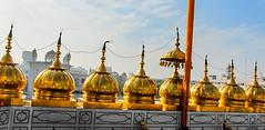 IMG_40931 (Manveer Jarosz) Tags: amritsar bharat goldentemple hindustan india nishansahib punjab sikh sriharmandirsahib blue fence gold gurdwara holy morning orange pilgrimage pole roof sky sunny temple top wall