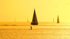 Sailing in a golden sea - Tel-Aviv beach (Lior. L) Tags: sailinginagoldenseatelavivbeach sailing golden hour telaviv beach sea seascapes silhouettes sailboat sailboats beaches goldenhour goldensea travel telavivbeach isreal