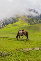 Paye (mimalkera) Tags: kaghanvalley naran kaghan shogran siripaye payemeadows lakesaifulmalook travelpakistan travelbeautifulpakistan travel wanderlust