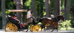 Sevilla (ertitocarli) Tags: horse caballo parque park seville sevilla spain españa barrido colo colour color camera shoot green orange pic