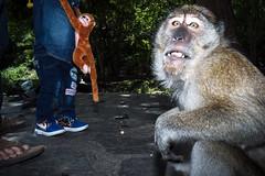 #06 (Sakulchai Sikitikul) Tags: street snap streetphotography summicron songkhla sony a7s monkey flash thailand 35mm