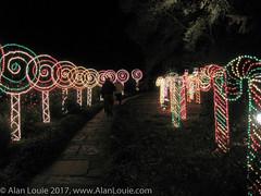 20031220 Bellingrath Xmas 0031 Lollypop row.jpg (Alan Louie - www.alanlouie.com) Tags: bellingrath christmas alabama theodore unitedstates us