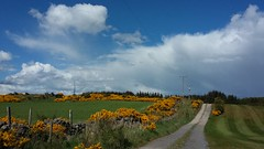 Balbithan, Aberdeenshire, May 2017 (allanmaciver) Tags: balbithan kintore aberdeenshire north east farmalnd arable gorse farmer track route road golf course fence clouds sunshine warm may walk enjoy explore allanmaciver