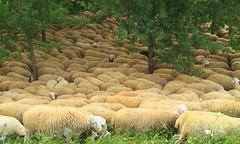 Ovejas en el Parque del Agua-Zaragoza (portalealba) Tags: zaragoza zaragozaparque aragon españa spain portalealba pentax pentaxk50 ovejas sheep ruby10