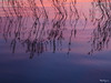 Reflections on water - Réflexions sur l'eau (monteregina) Tags: québec canada ca formes shapes reflets nature natur détails details designs rivièredesoutaouais ottawariver patterns lines lignes monteregina abstraction eau water natural ciel sky waterabstract ondulations ripples waterart abstract abstrait watersurface surfacedeleau naturetextures naturalabstractions abstraitnaturel artofwater ondulationsréflectives reflectivesripples réflexionsabstraites réflexions reflections ondulationsreflectives texture minimal waterreflections refletssurleau abstractpaintingbynature peintureabstraiteparnature spiegelung purpletons tonspoupres vagues waves waterpainting wasserabstrakt rose pink bleu blue colorgradation pattern