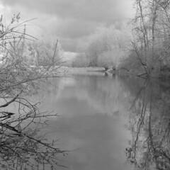 II (Other dreams) Tags: oxbowlake oxbow lake pomerania poland reflection vistula trees forest puddle pond fp4plus nofilter nature landscape paranols rolleiflex35f