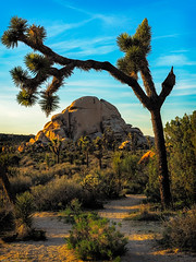 Joshua Tree Archway (jthight) Tags: ca usa landscape desert naturallight goldenhour nationalpark joshuatree boulders rocks nikond810 california sunshine march afzoom2470mmf28g clouds sunset trees sky tree unitedstates joshuatreenationalpark lightroom landform twentyninepalms us