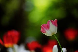 flower 1200
