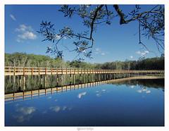 URUNGA WETLANDS BOARDWALK (marcel.rodrigue) Tags: urungawetlandsboardwalk urunga midnorthcoast newsouthwales bellingenshire australia marcelrodrigue jkamidnorthcoast photography boardwalk