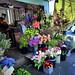 Elgin Crescent Flower Shop