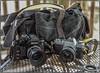 Yesterday's Film Shooters (NoJuan) Tags: domke nikkor nikon nikkorlens nikonporn vintagecamera vintagenikonporn cameraporn cameraportrait 35mmfilm filmcameras ishootfilm camerabag whatsinmycamerabag domkebag