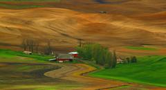 palouse curves (hmong135) Tags: palouse agriculture farm barns landscape patterns design washington