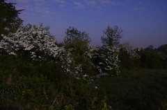 SPC_2299 (seansverige) Tags: moonlight naturallightphotography nocturnalphotography longexposure