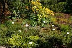 DSC_8763 (facebook.com/DorotaOstrowskaFoto) Tags: ogródbotaniczny kwiaty powsin warszawa