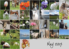 May 2017 Mosaic (keepps) Tags: bighugelabs mosaic month
