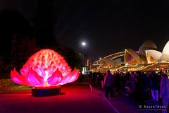 20170531-34-VIvid Light display at Sydney Botanic Gardens (Roger T Wong) Tags: 2017 australia nsw newsouthwales rogertwong sel2470z sony2470 sonya7ii sonyalpha7ii sonyfe2470mmf4zaosscarlzeissvariotessart sonyilce7m2 sydney sydneybotanicalgardens vivid festival flower illuminated lights night red warratah