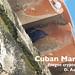 Cuban Martin, Progne cryptoleuca