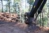 Forestry Field Day (BLMOregon) Tags: bureauoflandmanagement blm forestry forests forestmanagement timber timbersale harvest timberharvest logging forestryfieldday chokersetter loggingoperation logtruck skidder logloader