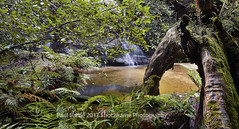 Cataract Falls - Blue Mountains - NSW (paulbartle - Shot2frame Photography) Tags: waterfall cataractfalls waterfallcircuit lawson bluemountains hazelbrook nsw newsouthwales shot2frame shot2framephotography