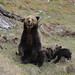 Grizzly group