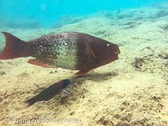 Hanauma Bay 18 (venusnep) Tags: hanaumabay hanauma bay underwater tropicalfish tropical fish iphone watershot watershotpro hawaii snorkeling travel travelphotography may 2018
