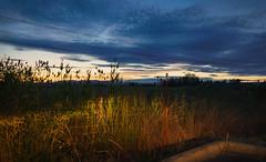 Loss (rosenunezsmith) Tags: lanecounty eugene regionaldistinctions landscape sunset lightplay suburbanlandscape powerlines semiindustrial bluehour fence builtlandscape oregon pacificnorthwest headlights america field pnw upperleftusa fences fields