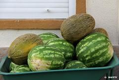 IMG_2111 (naty7naty) Tags: melão melancia fruta