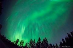 gpo-20170528-0142-aurora-10 (hgrapek) Tags: thegreatbear thelittlebear ursaminor asterism aurora bigdipper canada constellation northernlights sky stars