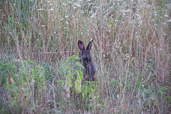 Ciao! (That_Smiling_Face) Tags: roma rome caffarella animals rabbit coniglio nature