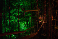 RedWoods Nightlight Rotorua NZ (JamesZcw) Tags: new zealand rotorua redwoods nature forest