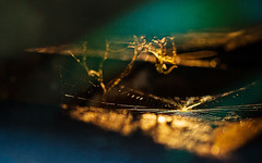 arachne (mothletting) Tags: canoncamera canon canon5d canon5dmkii canonusa digitalphotography digital spiderweb colorful sunset sunlight daylight naturallight nature light macro 100mmcanonlens 100mm