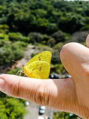 bug insect inseto animal borboleta burttefly samsung... (Photo: carlos.ufmg on Flickr)