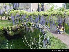 The world 39 s best photos of wonderland flickr hive mind - I giardini di alice latina ...