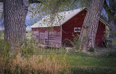 Among the Cottonwoods - Weld County, Colorado (www.rootsstudiophoto.com) Tags: barn shed cottonwood plains frontrange colorado weldcounty mead agriculture farm ranch historicbuilding frontrangephotography coloradophotography farmphotography coloradolandscape