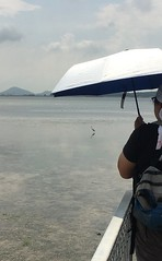 (Ravenblack7575) Tags: chekjawaboardwalk heron intertidal seagrass