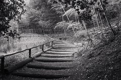 Morning stroll up to the bamboo garden (PeterThoeny) Tags: saratoga california siliconvalley sanfranciscobay sanfranciscobayarea hakonegardens garden stairs nature forest bamboo bambooforest architecture monochrome blackandwhite serene peaceful 1xp raw sony sonya7 a7 ii a7mii alpha7mii ilce7m2 fe2870mmf3556oss sel2870 photomatix hdr qualityhdr qualityhdrphotography fav200 fullframe